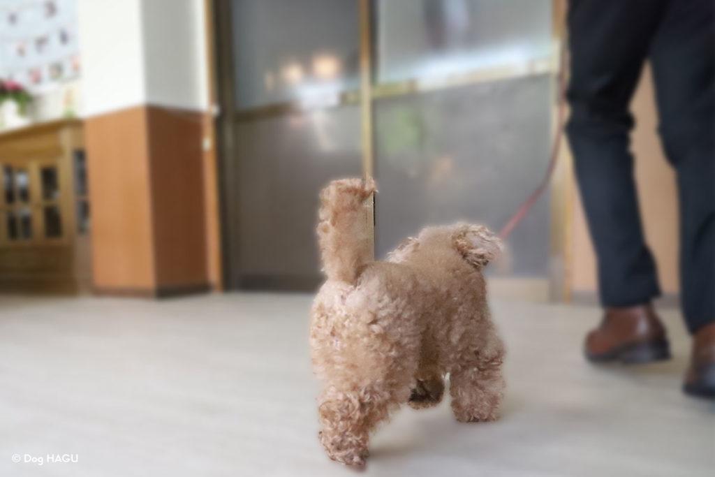 【ドッグトレーナー監修】犬が飼い主についてくる理由・心理って?