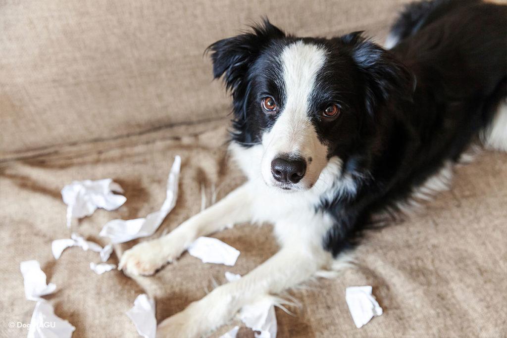 犬がついてくるのは「分離不安症」が原因かも?