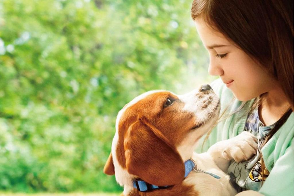 犬映画『僕のワンダフル・ジャーニー』イーサンの孫娘「CJ」を守るために生まれ変わる