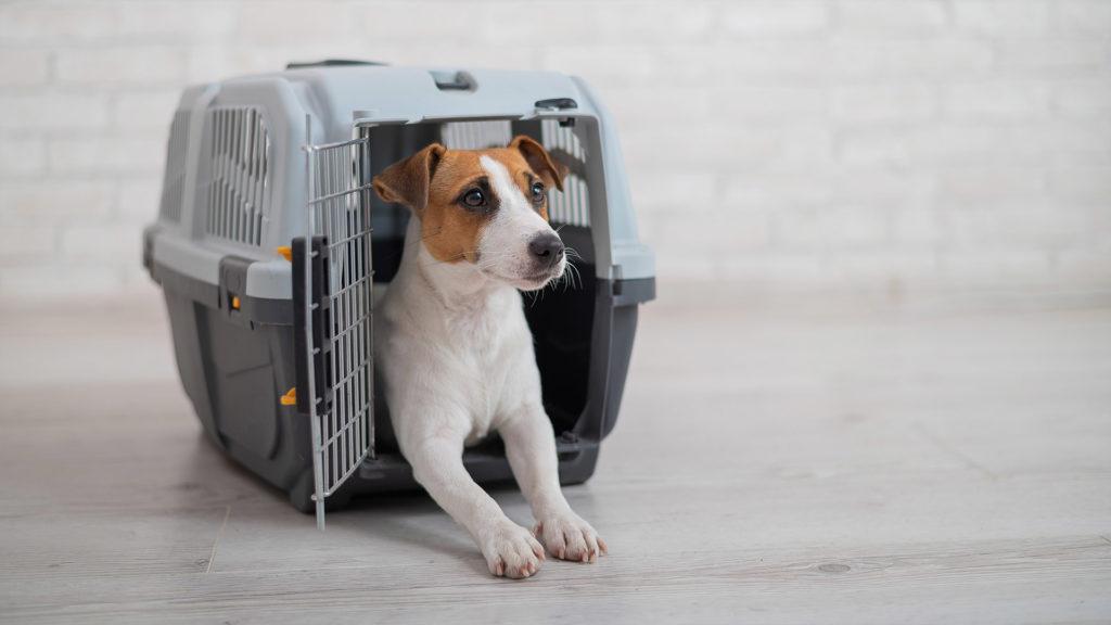 クレート選びのポイント犬がクレートの中で方向転換出来るくらいの幅と大きさの物