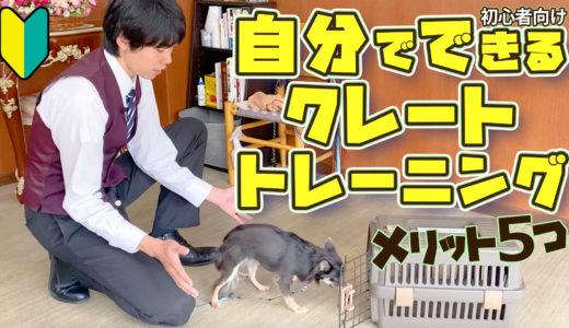 【犬のしつけ専門家が解説】自分で出来る!クレートトレーニング【犬を飼うのがはじめての方向け】