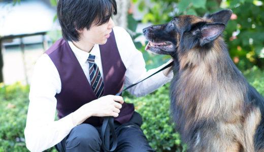 犬の専門家から伝えたいとこ【理想と現実】犬を迎え入れる上で知っておきたいこと。