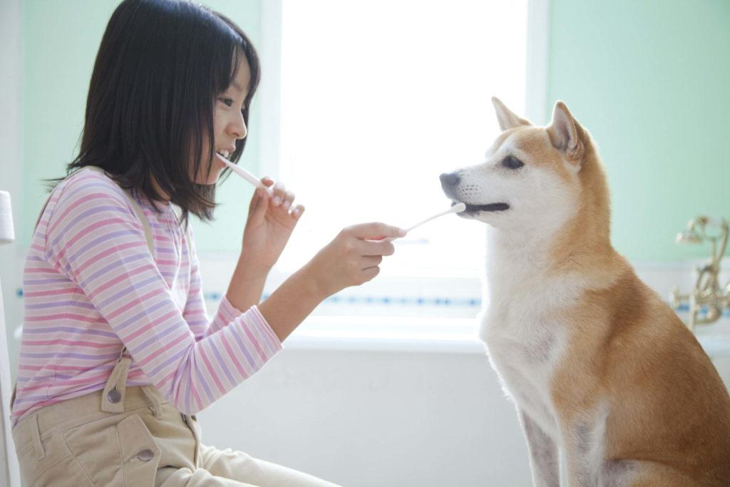 犬の歯磨きトレーニング 歯ブラシタイプ