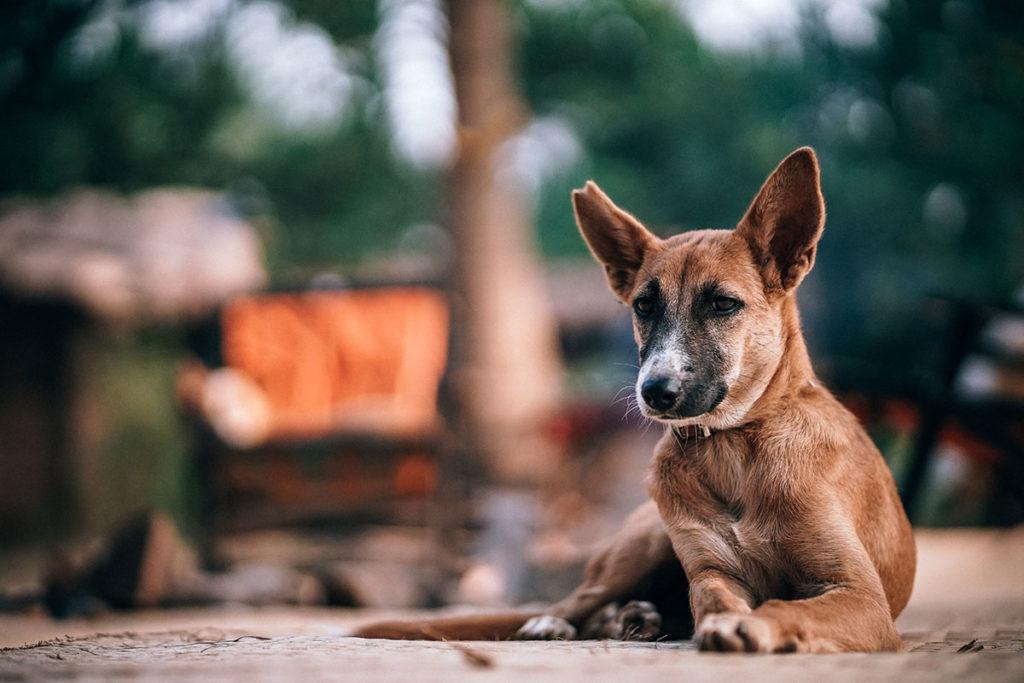 犬のエネルギー発散方法には「疲れる運動」がおすすめ|吠えるトラブル解消!