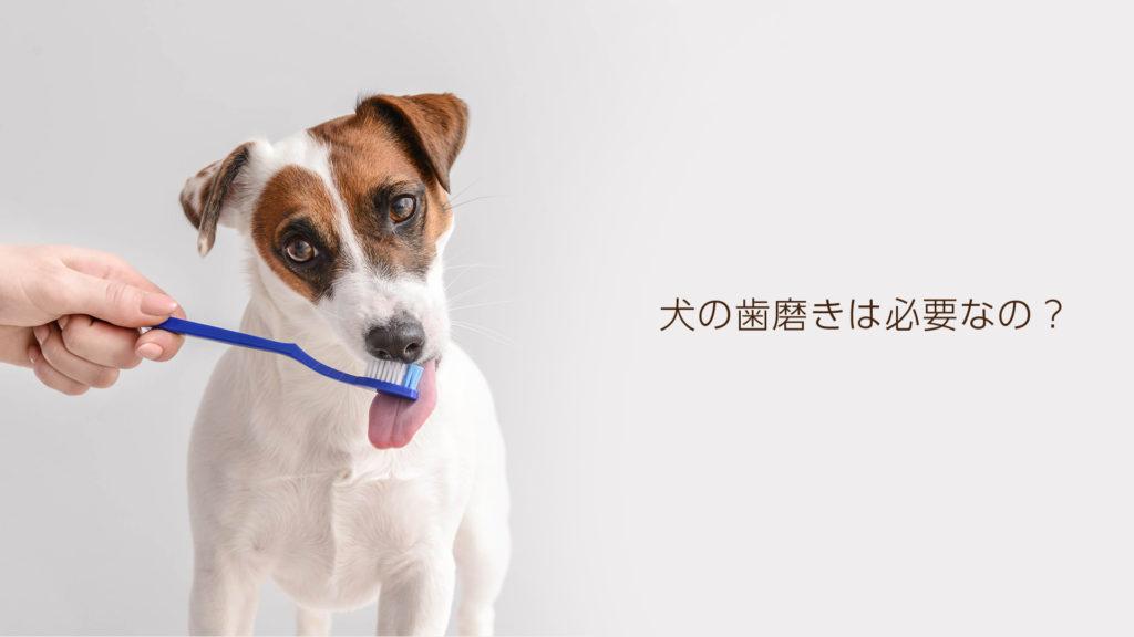 犬の歯磨きの必要性