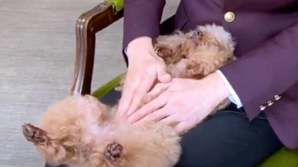 犬の歯磨きトレーニング 体や顔周りを触って慣れさせるトレーニング