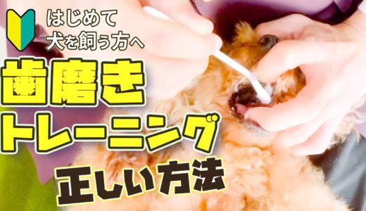 【ドッグトレーナー解説】犬の健康管理は毎日の歯磨きから!正しい歯磨き方法