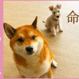 東京の保護犬の活動を行う一般社団法人ハグぺットジャパン です。ペットと飼い主が、 ずっと共に生きていく大切な家族でいるために