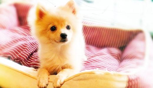 【ドッグトレーナー監修】犬が吠える理由はなに?どうしつければ無駄吠えを改善できるの?