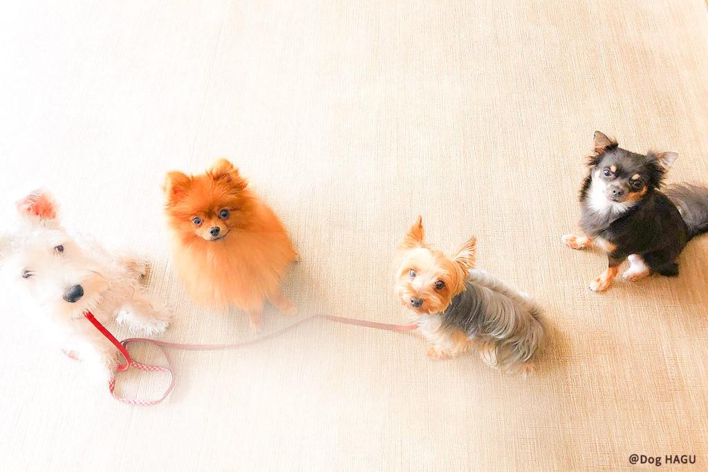 東京の世田谷区と文京区の犬のしつけ教室 「犬のしつけハグ」で訓練中犬の吠えに対するしつけのためには「なぜ吠えるのか」を知る必要があります