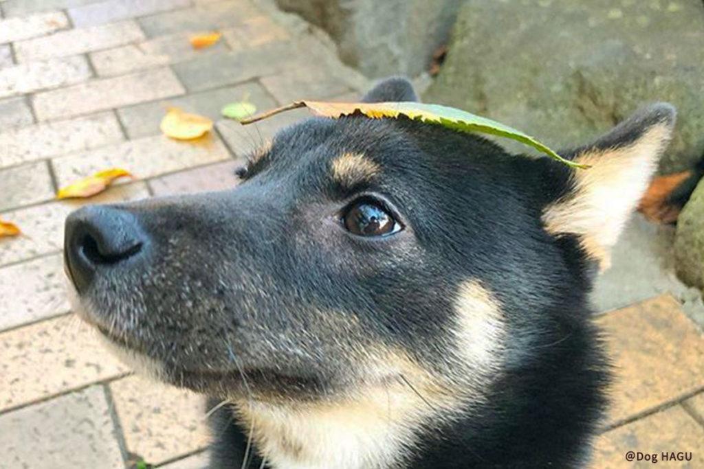 東京の世田谷区と文京区の犬のしつけ教室 「犬のしつけハグ」で訓練中犬の吠えるクセを改善する二つのしつけ