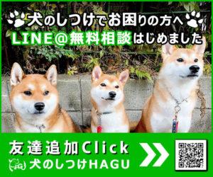 東京の世田谷区と文京区の犬のしつけ教室です。LINE@で犬のしつけの無料相談はこちらへ