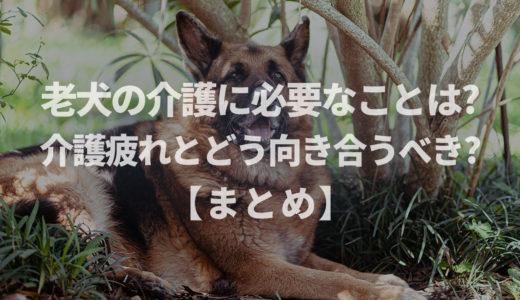 【ドックトレーナー監修】老犬の介護に必要なことは?介護疲れとどう向き合うべき?【まとめ記事】