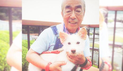 志村けんさんの死に直面した愛犬達!犬は飼い主さんの死を理解できるの?