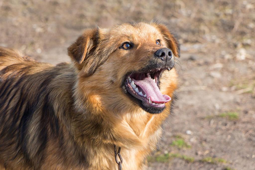 犬が吠える主な理由|うるさい!と怒る前に知っておきましょう