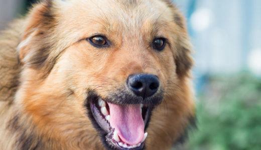 【犬のしつけ専門家 監修】犬が吠える理由とは?「うるさい!」のトラブルを解消する方法を紹介