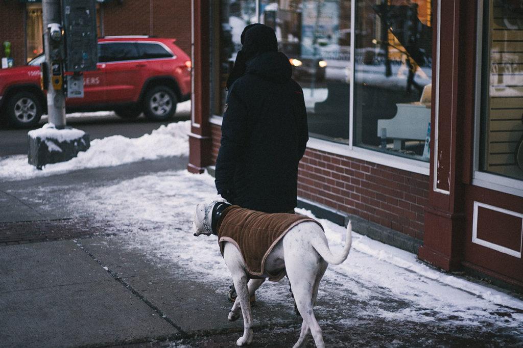 犬のお散歩のコツ|飼い主の「疲れる」、犬の「吠える」の解消のために