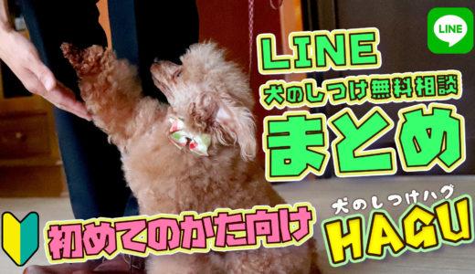 【ドッグトレーナー解説】犬のしつけ無料相談!犬のしつけは大変!!プロの解決法を教えます!