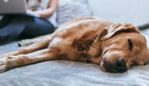 【ドッグトレーナー監修】犬の「疲れた仕草」と対処方法|疲れるのがダメなわけではありません