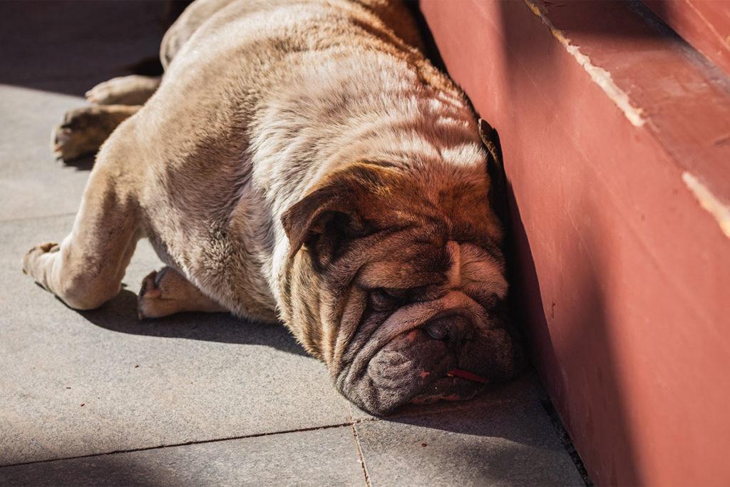 犬が「疲れた!」と感じやすくなる要因を2つ紹介します