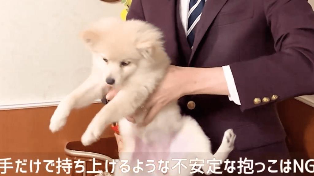 東京都文京区の犬のしつけハグで不安定な抱っこをされる犬