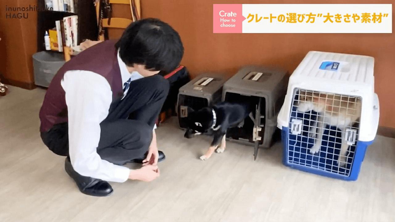 東京都文京区犬のしつけ教室で中型のクレートを説明するドッグトレーナー