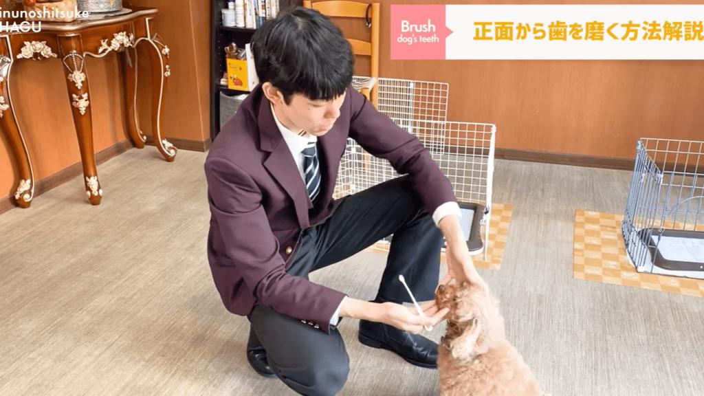 東京の文京区の犬のしつけ教室でh磨きトレーニングするトイプードル