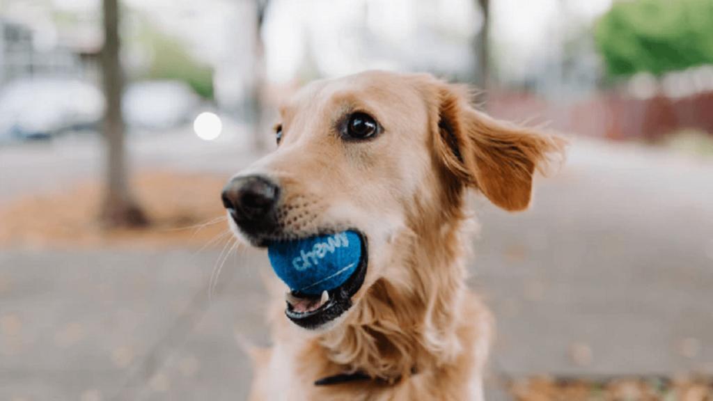 犬が青いボールを噛んでいる