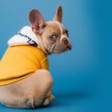 【ドッグトレーナー監修】なぜ犬は服を嫌がるの?|服を着せることのメリット・デメリット
