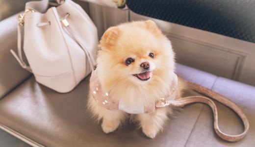 【ドックトレーナー監修】嫌がる犬に服を着せるコツ|服を着用させることのメリットは?