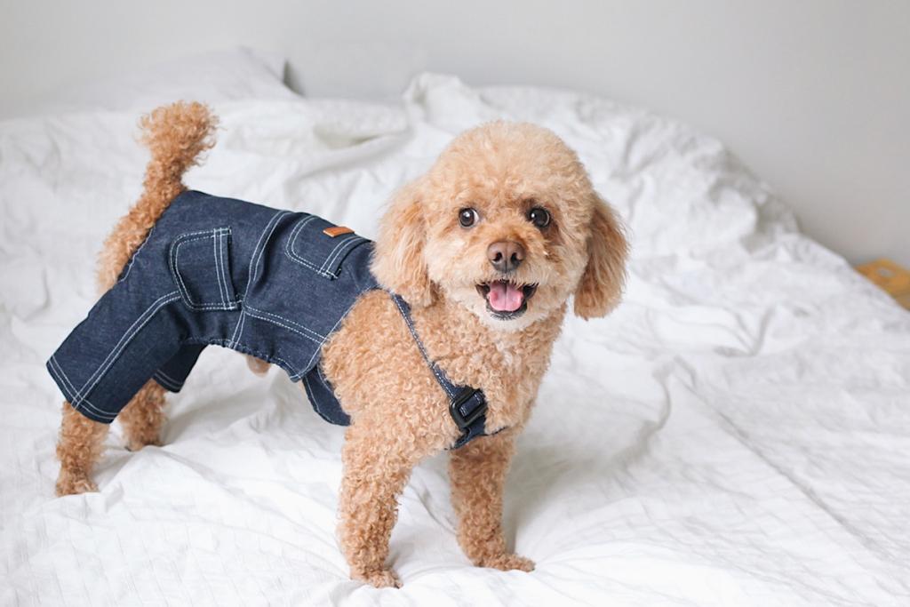嫌がる犬に服を着せるコツ|服を着用させることのメリットは?