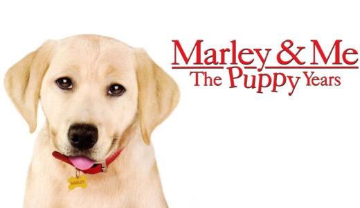 ラブラドルレトリバー「マーリー2 世界一おバカな犬のはじまりの物語」あらすじ