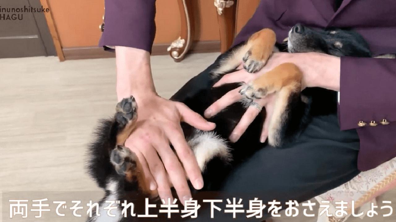 東京都文京区の犬しつけ教室で仰向け抱っこのトレーニング