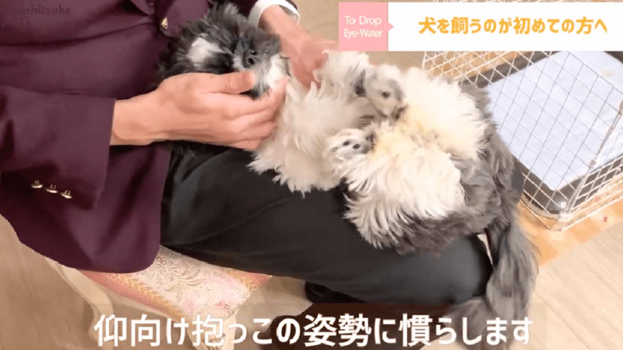 東京都文京区の犬のしつけ教室で仰向け抱っこをするドッグトレーナー