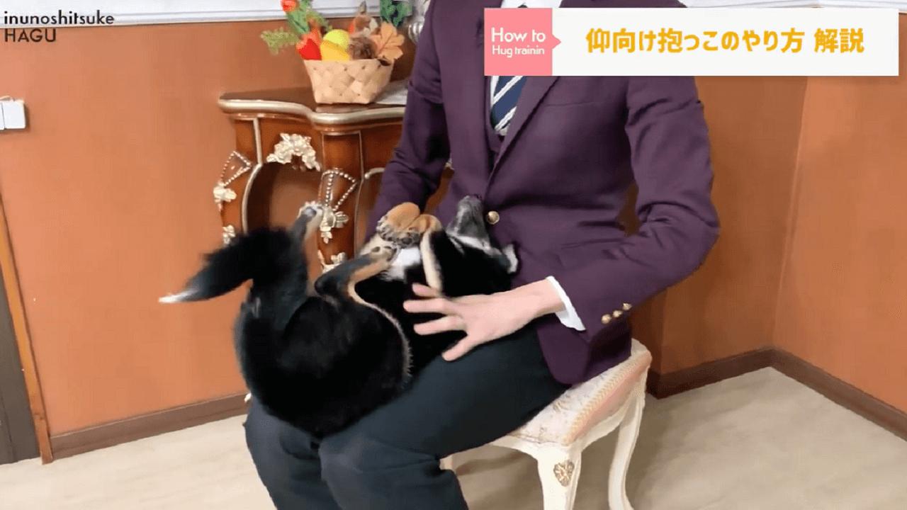 東京都文京区の犬のしつけ教室で膝の上で仰向け抱っこをされている柴犬