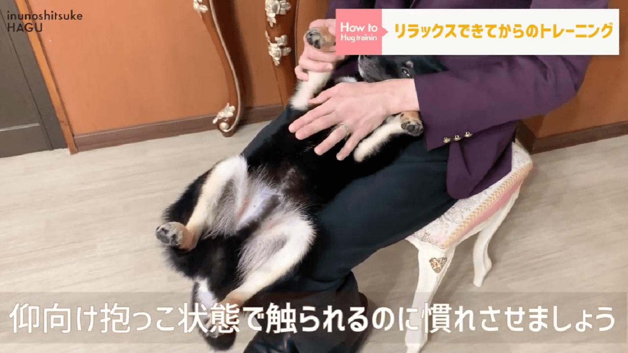 東京都文京区の犬のしつけ教室で触る事に慣れさせるトレーニング