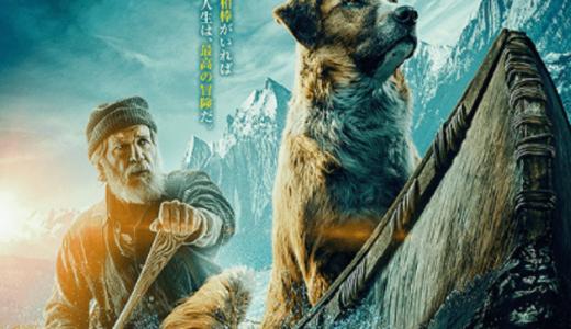 セント・バーナードとスコットランドの牧羊犬のミックス『野生の呼び声』【犬映画】あらすじ