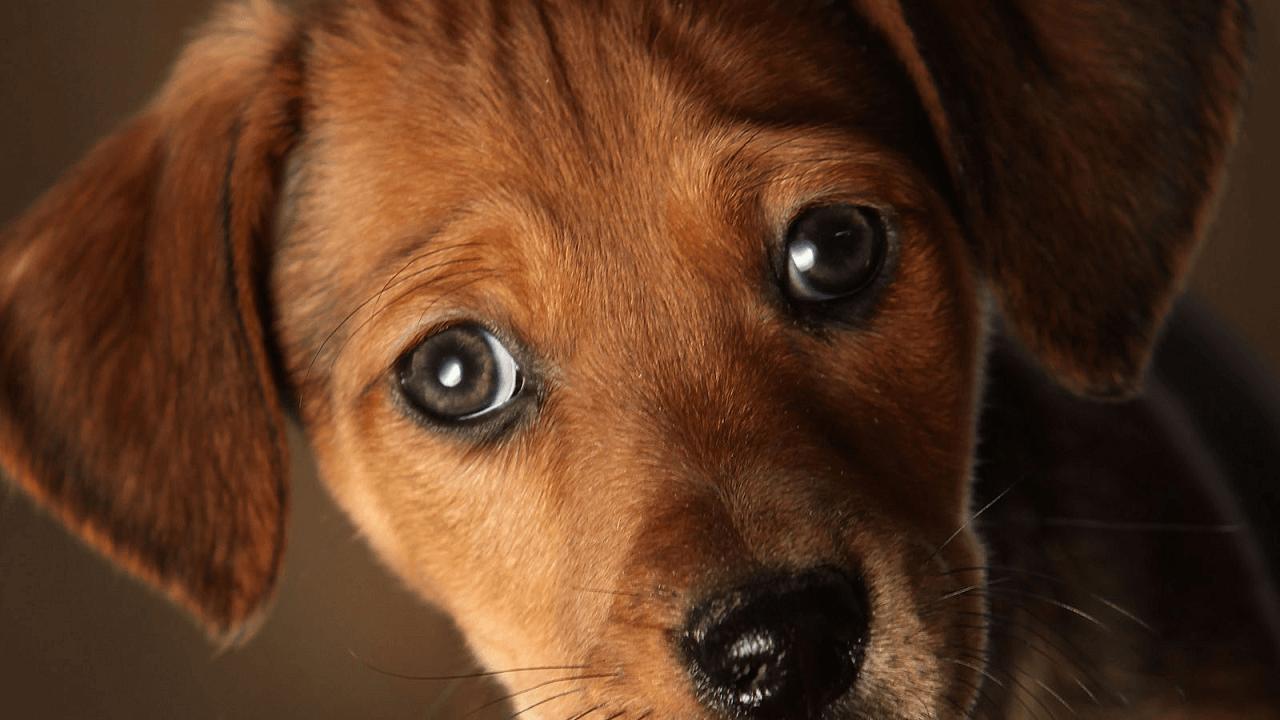 こっちを見つめている子犬