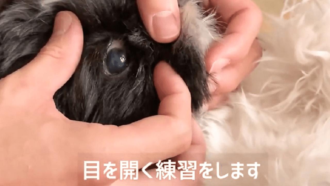 犬の目を開く練習