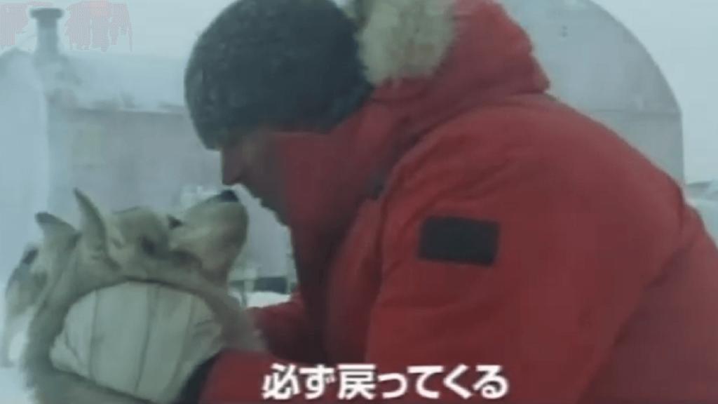犬との別れを惜しんで再会を誓っている 8頭のシベリアンハスキーと人との絆『南極物語』【犬映画】あらすじ
