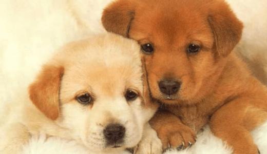 【ドッグトレーナーからのお願い】犬を迎え入れたらやって欲しいこと!愛犬との正しい接し方