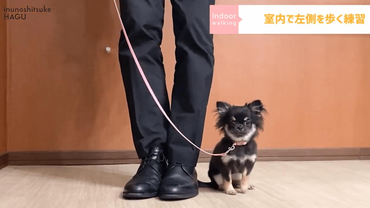 東京都文京区の犬のしつけ教室で犬の散歩の練習