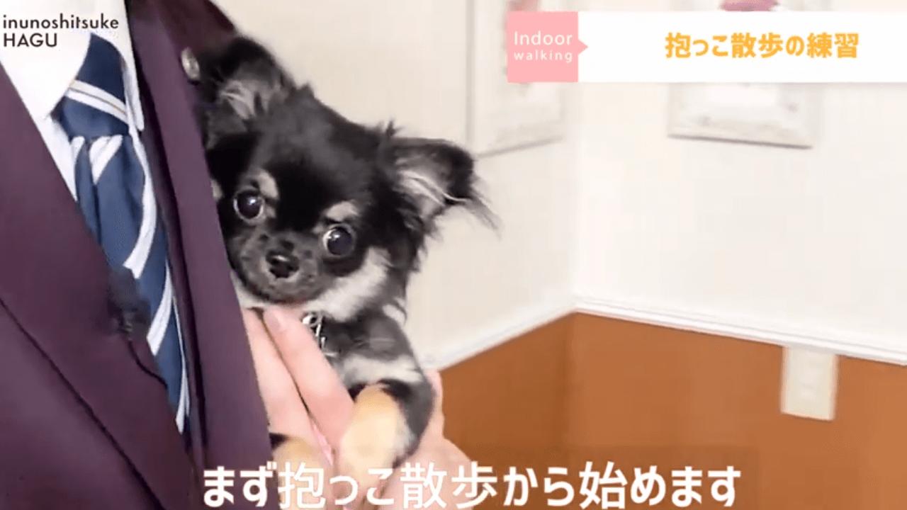 東京都文京区の犬のしつけ教室で犬が抱っこされている