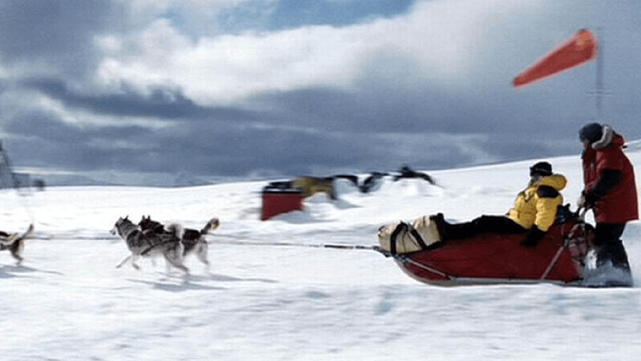 南極でソリをひく犬