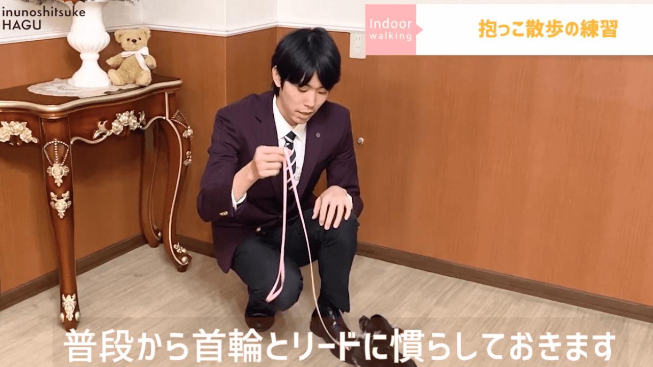 東京都文京区の犬のしつけ教室で犬に首輪とリードを付けている