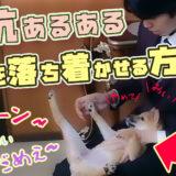 【ドッグトレーナーが実践動画で解説】犬を落ち着かせる方法【緊張して震えている】