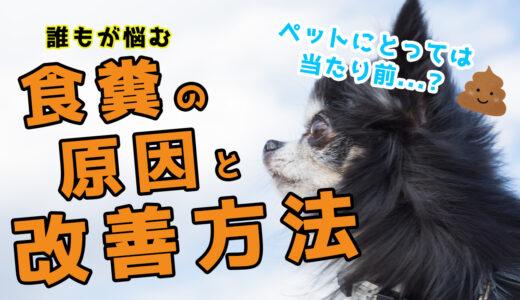 【ドッグトレーナー解説】愛犬がう〇ちを食べちゃう時の対処法教えます!