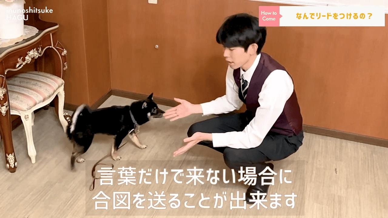 東京都文京区の犬のしつけ教室でリードをつけてトレーニングを行う犬