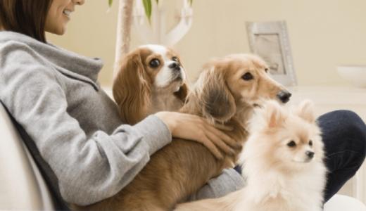 【あれって駄目なの!?】室内飼いの犬についやっちゃうNG行動-5選-【ドッグトレーナー解説】
