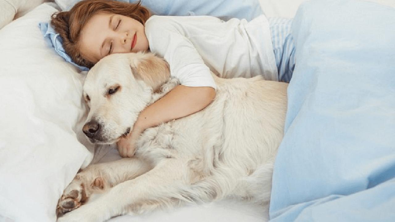 ベットの上で犬と少女が寝ている